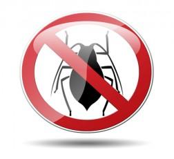 Eliminar plagas cucarachas